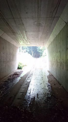 201866麻賀多神社_180616_0028