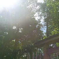 2018613猿田彦神社_180630_0024